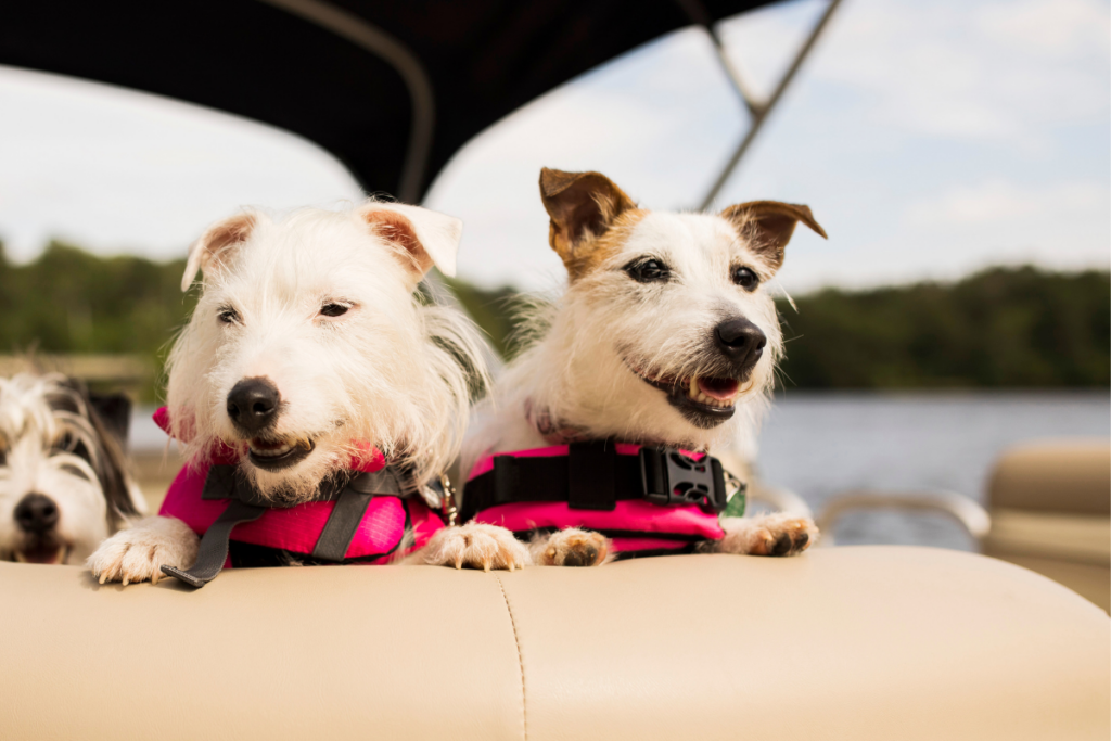 cane in barca